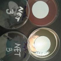 Risultati delle analisi per la ricerca dei parametri indicatori di contaminazione batterica.